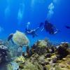 A generosidade do mar atuando no equilíbrio interior