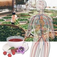 Combinação de acupuntura e ervas chinesas aumenta a recuperação pós-AVC
