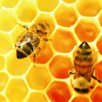 Mel: A saúde que vem das abelhas