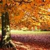Um Outono muito especial